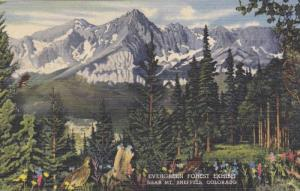 Evergreen Forest Exhibit near Mt. Sneffels in The Walter C. Mead Hall, Denver...