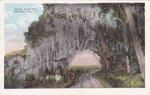 Florida Daytona Royal Arch Oak