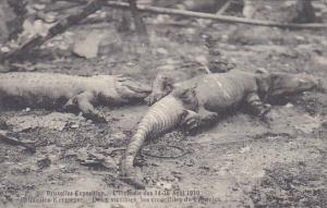 Brussels Exposition Burned Crocodiles From Fire 14-15 April 1910