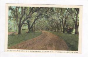 Marvelous Avenue Of Live Oaks To Afton Villa, Famous Ante-Bellum Home, St. Fr...