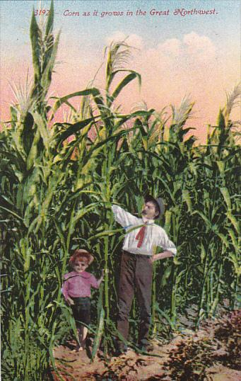 Corn As It Grows In The Great Northwest