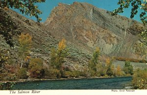 Vintage Postcard East Fork and Main Fork Junction View The Salmon River Idaho ID