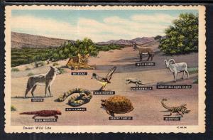 Desert Wild Life