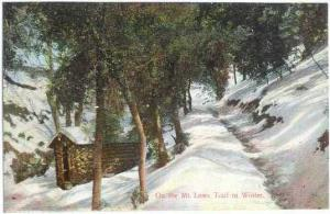 On the Mt. Lowe Trail in Winter near Los Angeles, California, CA, Divided Back ,