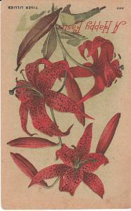 Tiger Lilies 1910