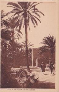 Algeria Une Rue Dans L'Oasis