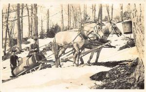 Vermont Area Maple Syrup Collecting Horse Drawn Sled RPPC Postcard