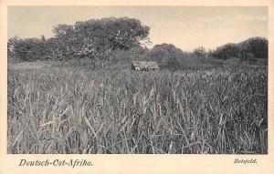 German East Africa Deutsch-Ost-Afrika, Tanzania Reisfeld, Postkarte Postcard