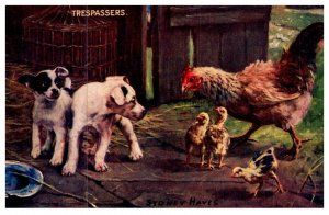 Dog ,  Puppies and chickens , Trespassers