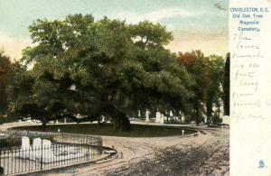 SC - Charleston. Old Oak Tree in Magnolia Cemetery