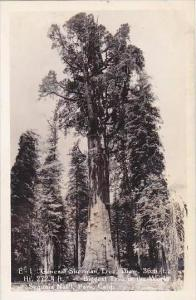California General Sherman Tree Diam Biggest Tree In The World Sequoia Nat L ...