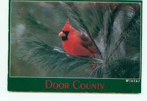 Red Bird Cardinal on Branch