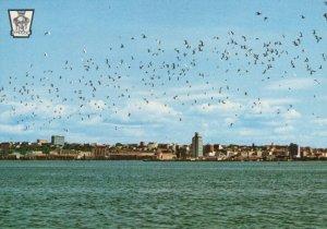 Angola Postcard - Luanda - The Birds in The Bay  RR9042