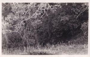 Sunken Forest St Govans Pembrokeshire Real Photo Postcard