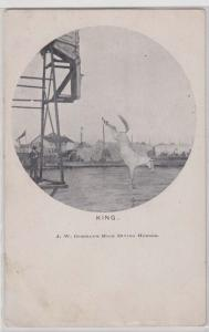 King, High Diving Horse