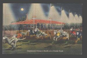 093676 GREYHOUND Dogs taking Hurdle at Florida Track Vintage