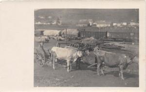 D63/ Occupational RPPC Real Photo Postcard c1910 Wagon Hauling Railroad Cows 20