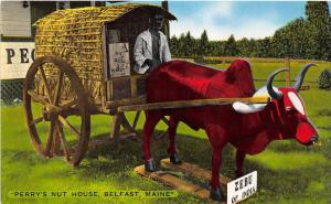 C26/ Advertising Ad Postcard c1940 Belfast Maine Perry's Nut House Zebu India 19