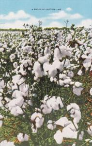 A Field Of Cotton In Bloom