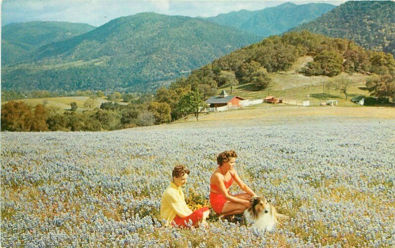 Beautiful Flowers Valley Wild Flowers Blaisdell Carmel California Postcard 11769
