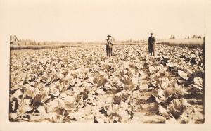 Real Photo Postcard~Farmer Leans on Hoe~Tobacco Field~Vest Fellow~1912 RPPC