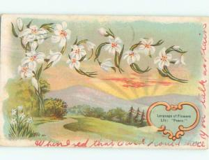 c1910 Language Of Flowers PEACE - SPELLED IN LILY FLOWERS AC5017