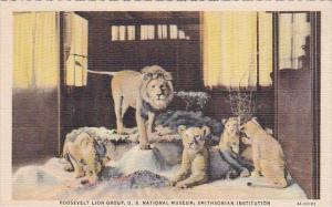 Roosevelt Lion Group U S National Museum Smithsonian Institution Curteich