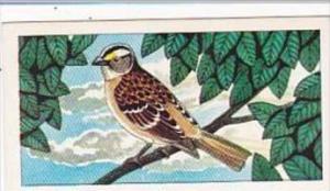 Glengettie Tea Trade Card Rare British Birds No 1 White Throated Sparrow