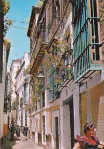 Spain Sevilla Pepper Street Ward Of Santa Cruz