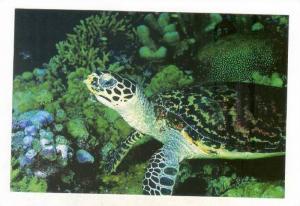 Sea & Land Turtles, # 7 of 10, 1990s