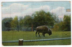 Springfield, Mass, Buffalo, Forest Park