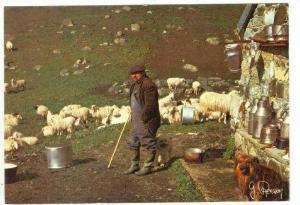 Sheep herder, France 50-60s