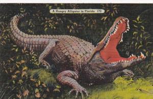 Florida A Hungry Alligator 1941