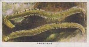 Wills Vintage Cigarette Card The Sea-Shore No 32 Ragworms  1938