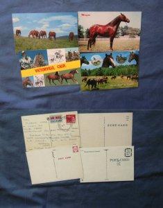 Variety of Horse Postcards, Morgan, Palomino, At Pasture, Farm Animals