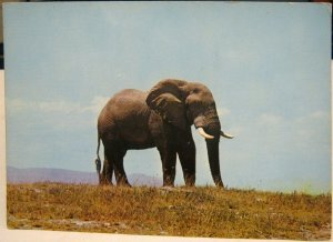 Kenya Wild Life from East Africa Elephant - unposted