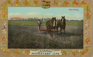Homestead Life , Canada , 1900-10s ; Harrowing , #2