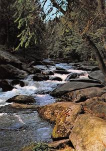 Romantischer Harz Bode Faelle bei Braunlage Creek Forest