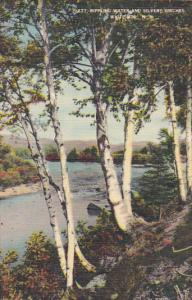 New Hampshire White Mountains Rippling Water and Silvery Birches 1943