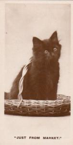 Cat Bought At Market Old German Real Photo Cats Cigarette Card