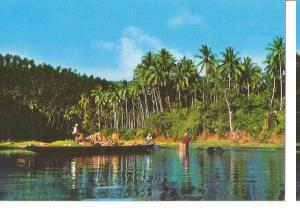 Postal 045720 : Coconut Harvest in Laguna. Philippines