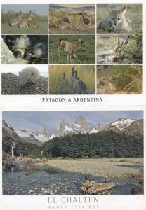 El Chalten Argentina & Animals Argentinian 2x Postcard