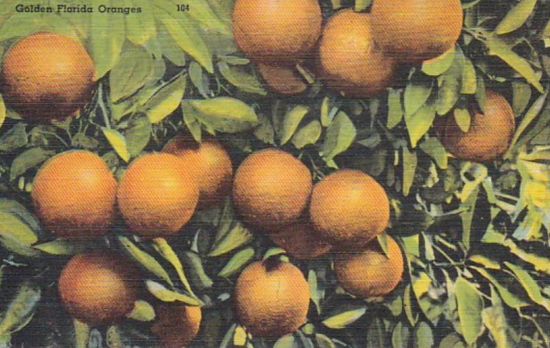 Florida Beautiful Golden Florida Oranges