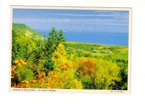 Coastal Farm Trees, Autumn in Nova Scotia, The Book Room Photo E Otto Milserv