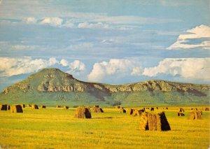 Vintage South Africa Postcard, 1977 Golden Harvest, Rural Country Farm Land DL6