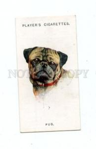166929 PUG by WARDLE John Player CIGARETTE card ADVERTISING