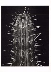 Postcard Cactus Plant, Series Espinas ICP New York #55608