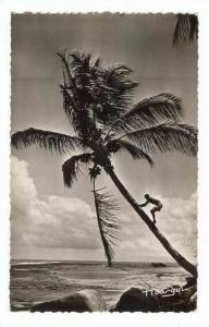 RP, Cueillettes Des Noix De Coco, A.O.F., Africa, 20-40s