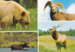 Canada Animals Of The Mountains Of Western Canada
