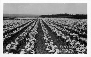 Harbor Michigan Hoffeldt's Flower Field Horticulture RPPC Photo Postcard 21-5983